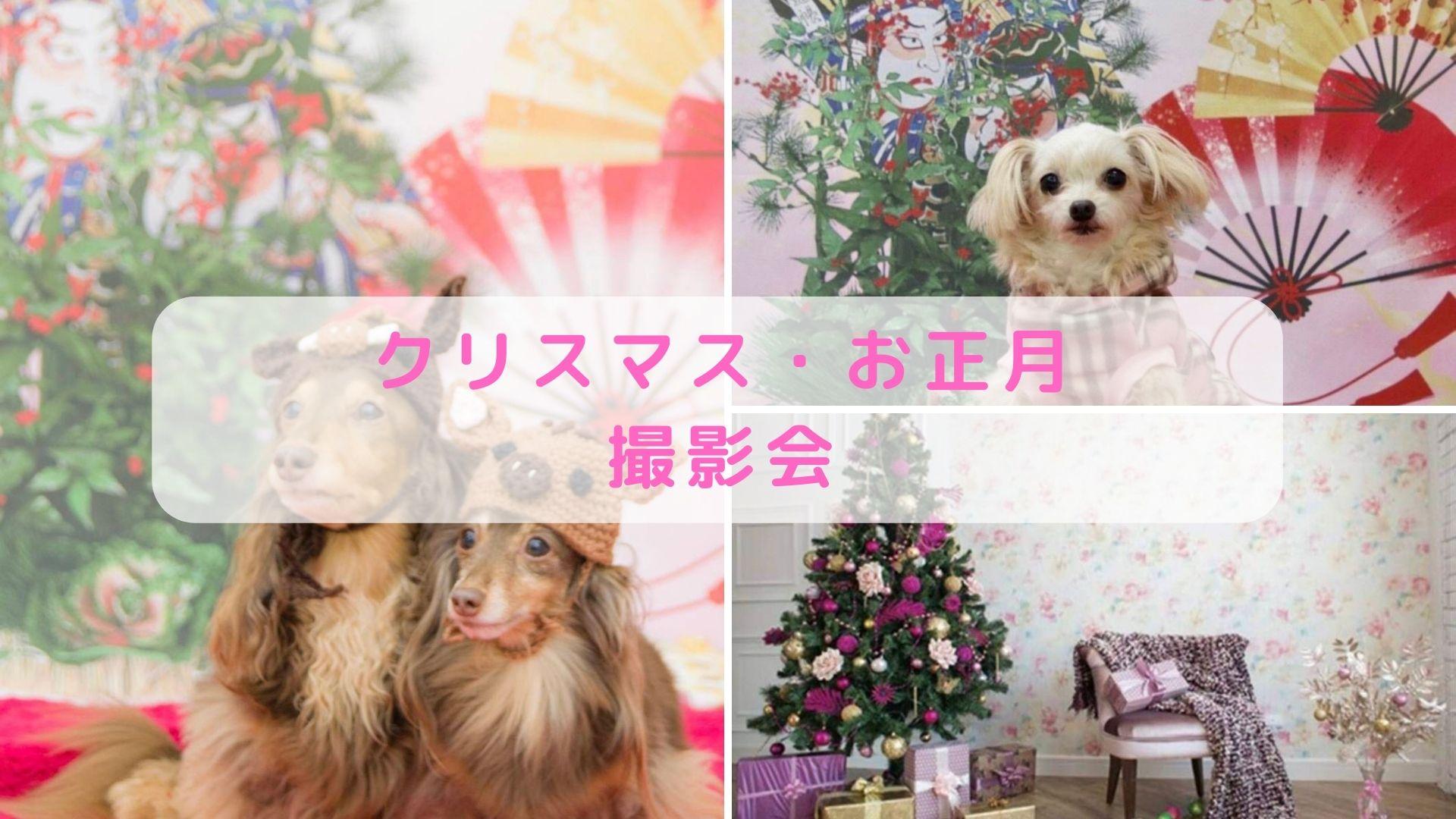 12/5 クリスマス・お正月撮影会!!