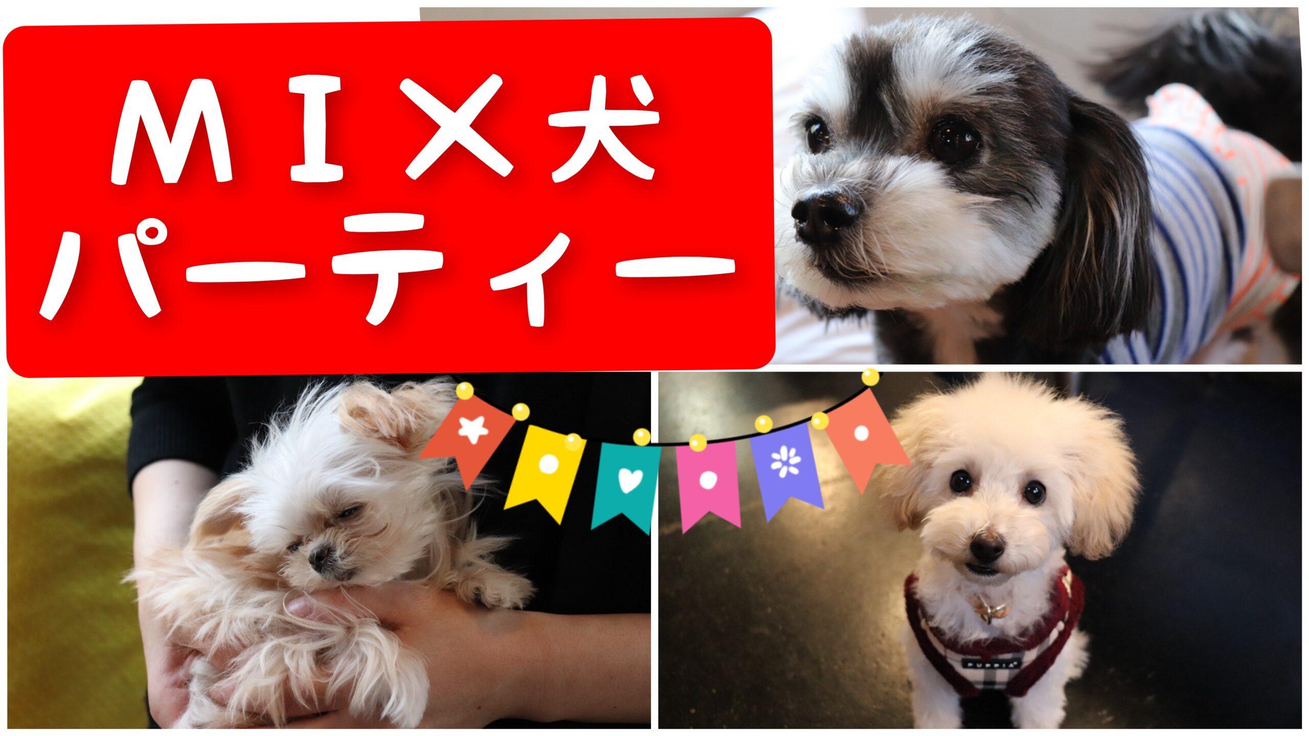 3/7 mix犬 パーティー