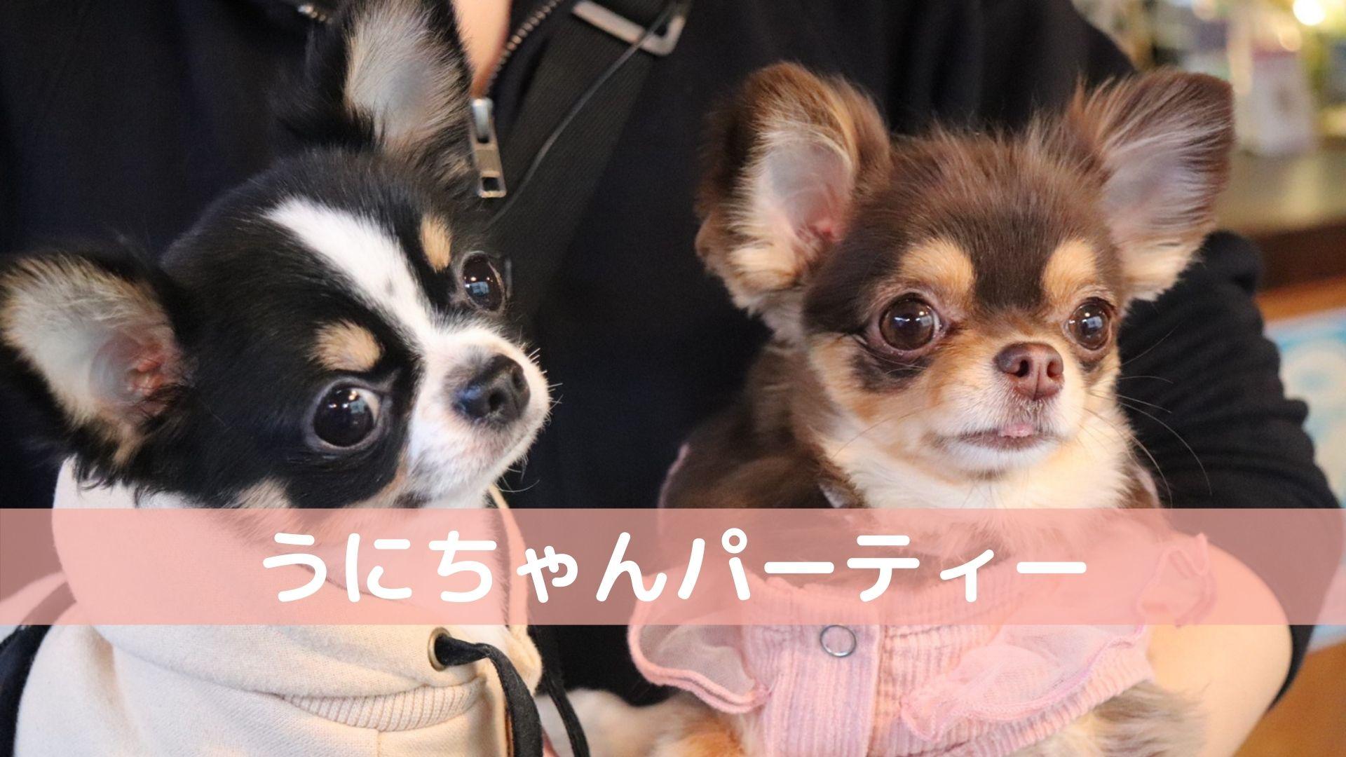 [受付終了]3/24 うにちゃんパーティー