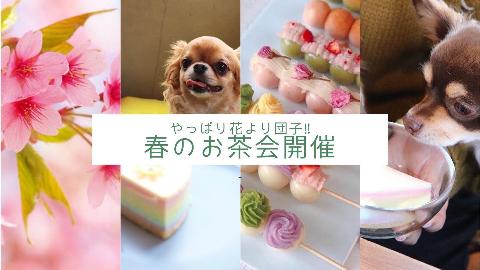 3/28 やっぱり花より団子‼️🌸春のお茶会開催