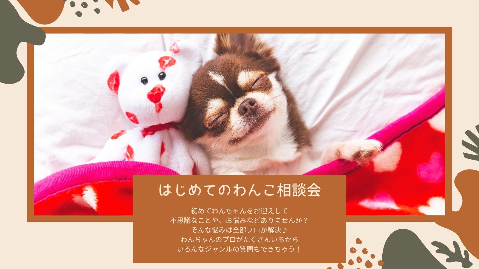5/15  はじめてのわんこ相談会