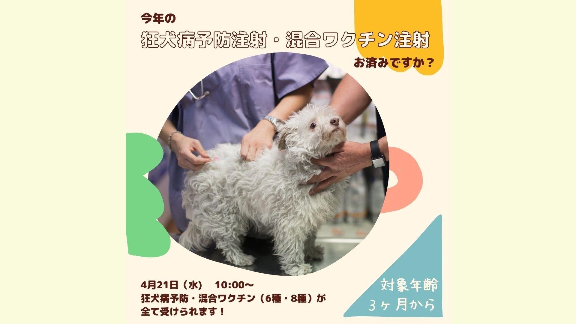 5/26  狂犬病予防接種&混合ワクチン接種と獣医師との相談会