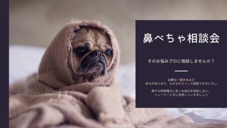鼻ぺちゃ相談会ヘッダー画像