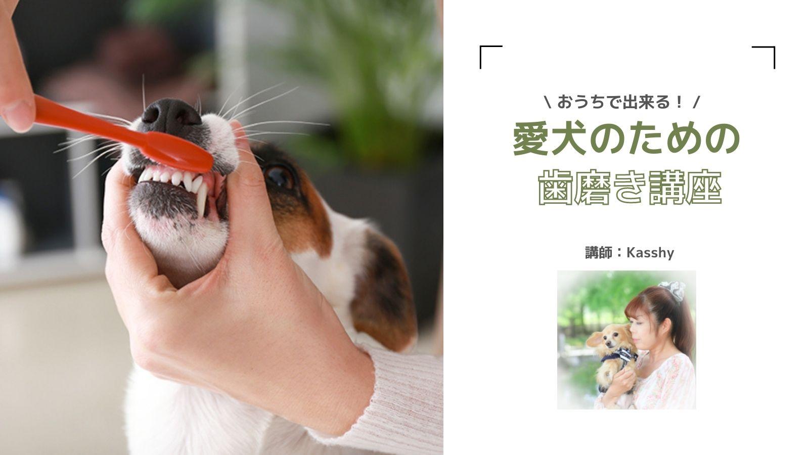 9/18 ※オンラインあり 愛犬のための歯磨き講座